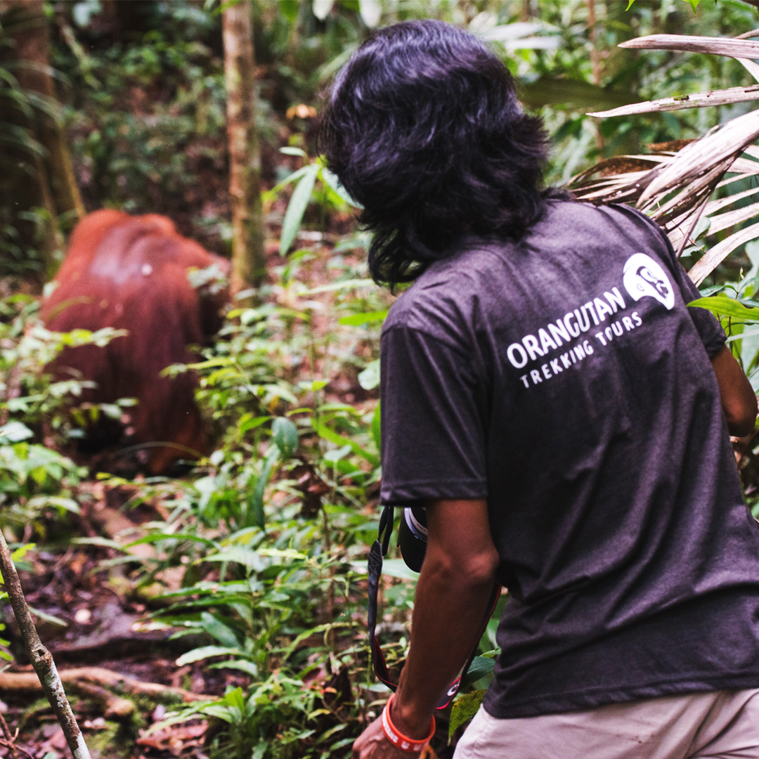 Arbain in Borneo's Jungle