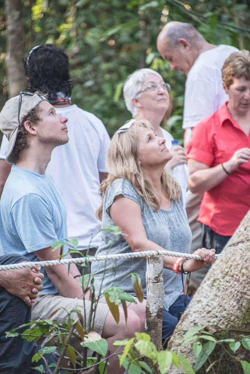 Looking at Orangutans
