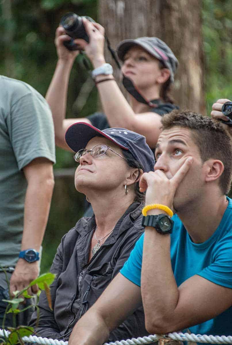 Watching Orangutans