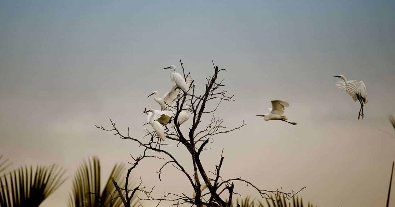 Borneo Bird Life