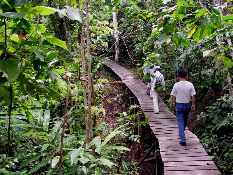 Board Walk Kutai National Park, Kalimantan, Indonesia Borneo