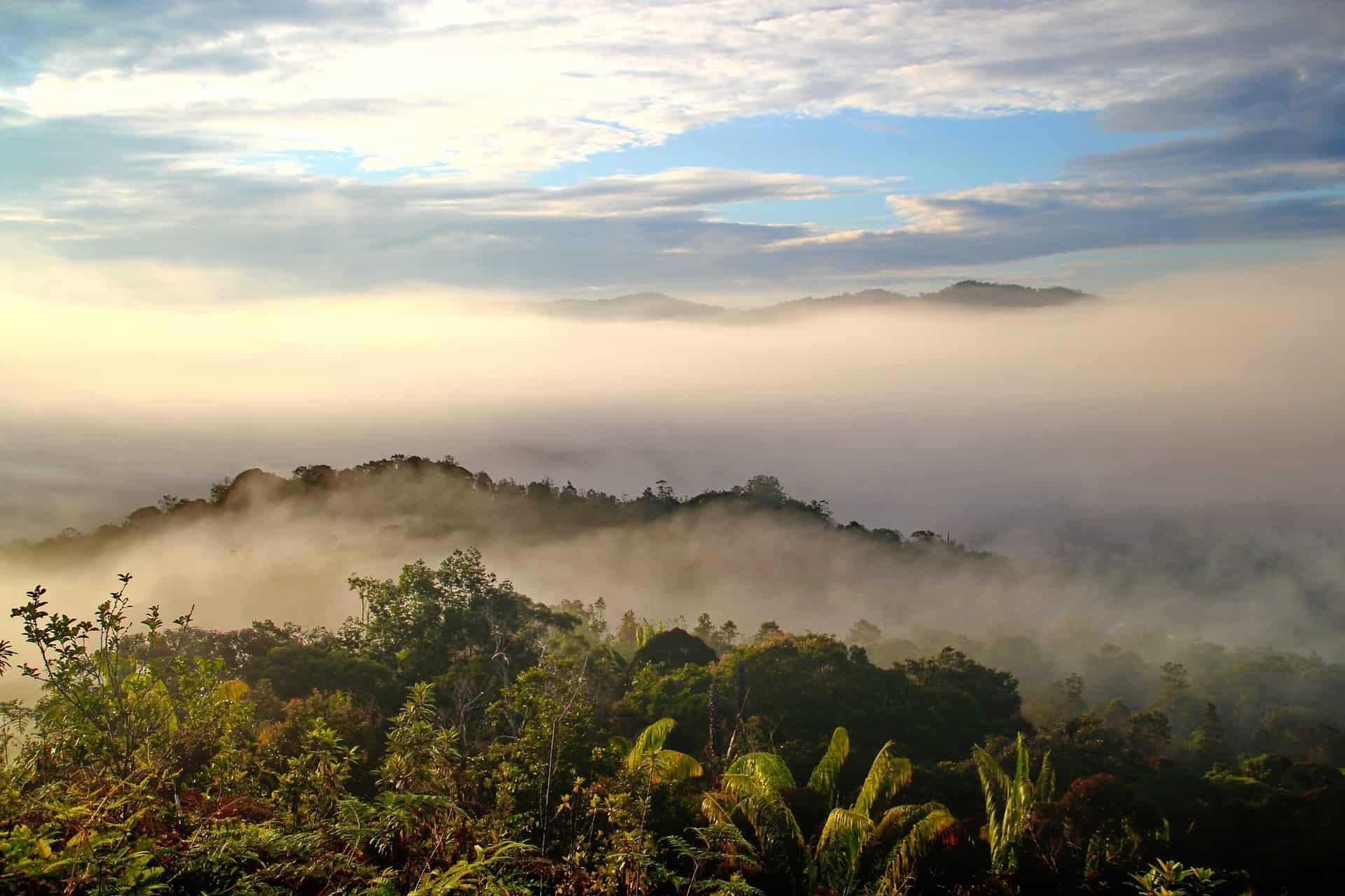 Sarawak Borneo