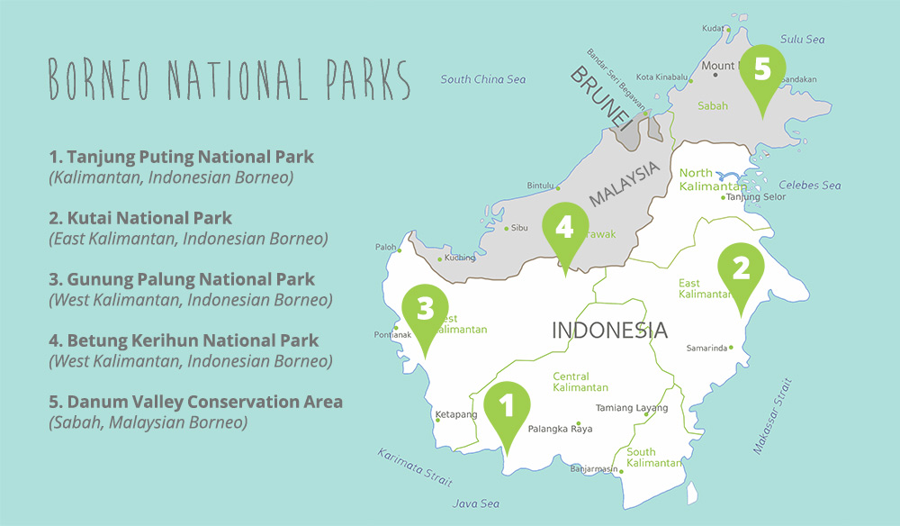 Map OTT top 5 National Parks to see orangutans in Borneo