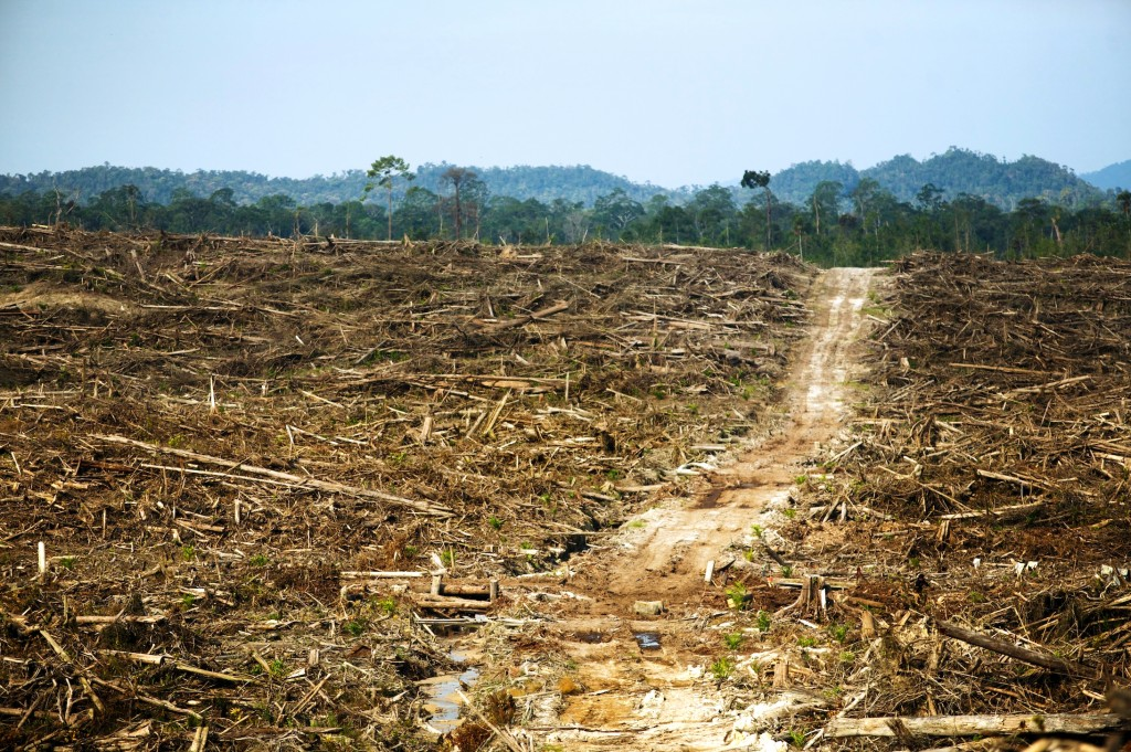 The results deforestation in Indonesia - an empty field of peat and remaining bark