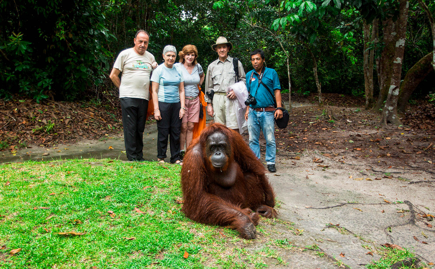 Group Viewing Orangutan Borneo