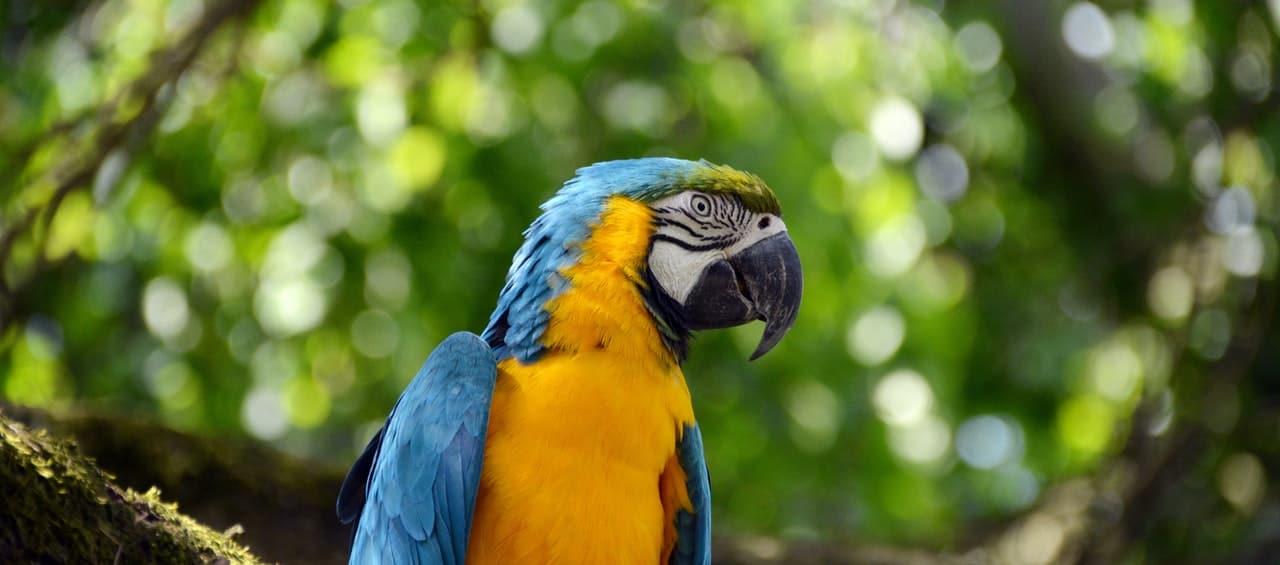 Macaw Amazon